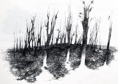 disegno_19